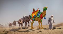 Concours de chameaux amateurs