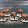 Pack de Hyènes