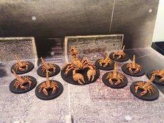 Scorpions Géants
