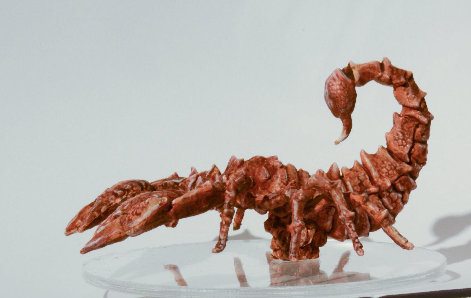 Scorpion-0078.JPG