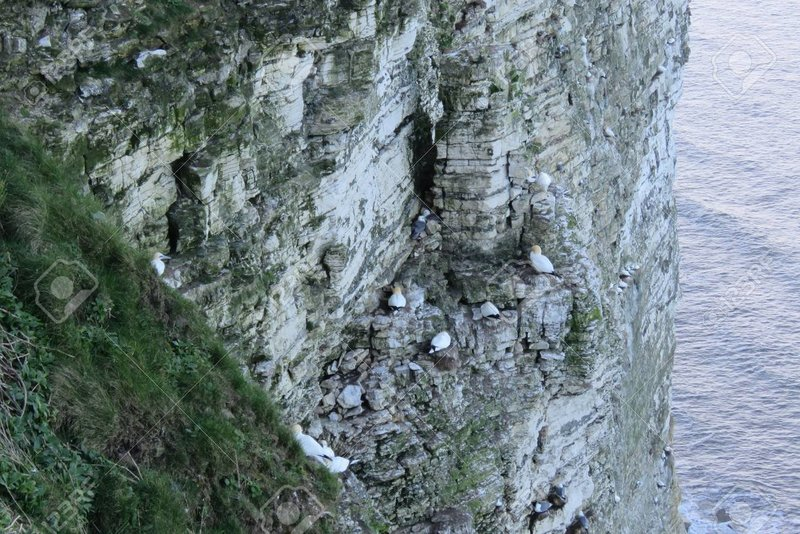 56640775-sea-birds-nesting-on-the-rspb-site-at-bempton-cliffs-bridlington-east-yorkshire.thumb.jpg.735acf955c79150442a7f523e3c84699.jpg