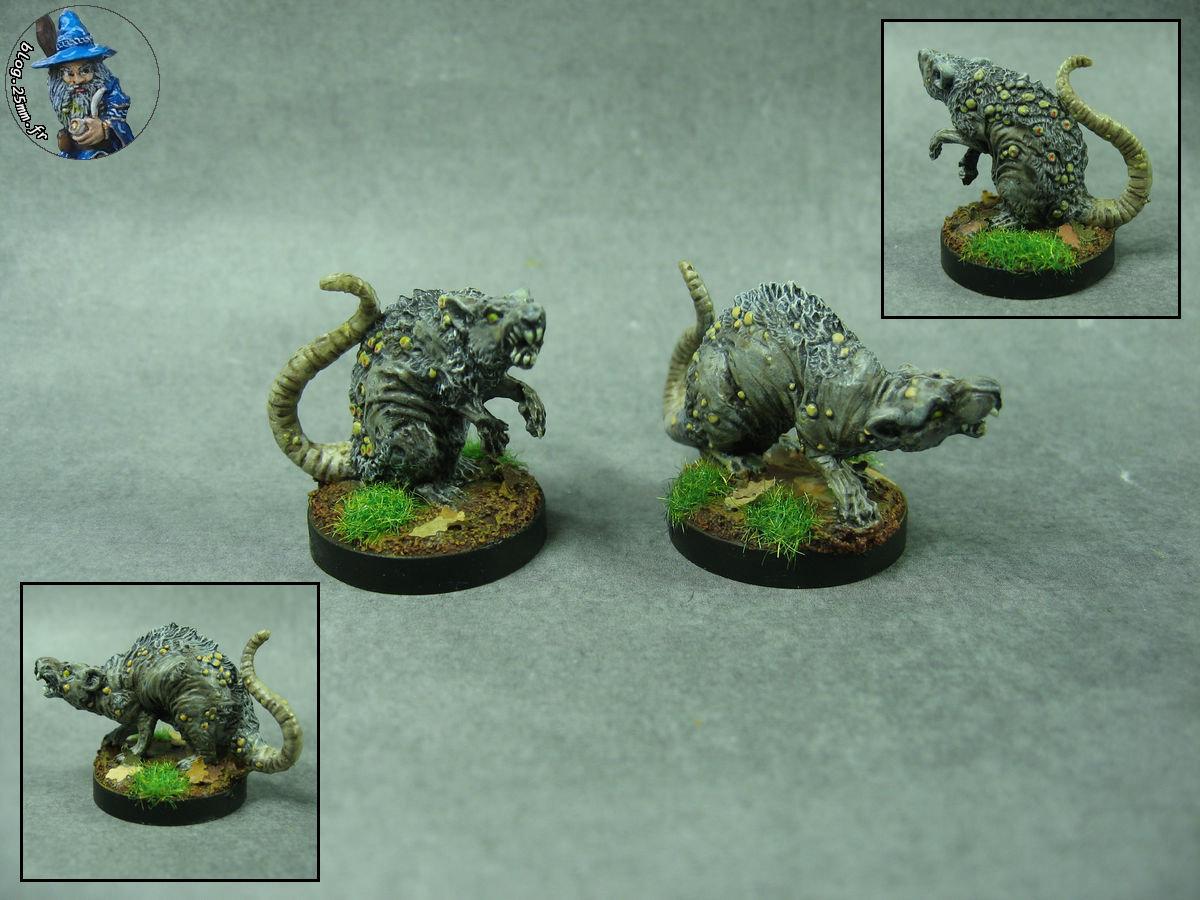 RoSD - rats.JPG