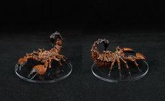 Stygie - Reine Scorpion